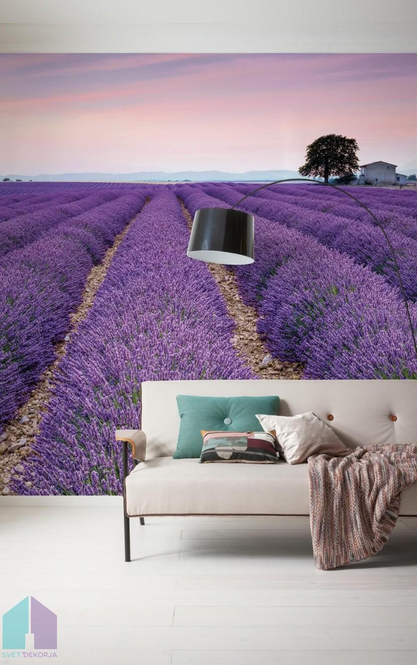 Fototapeta - Provence