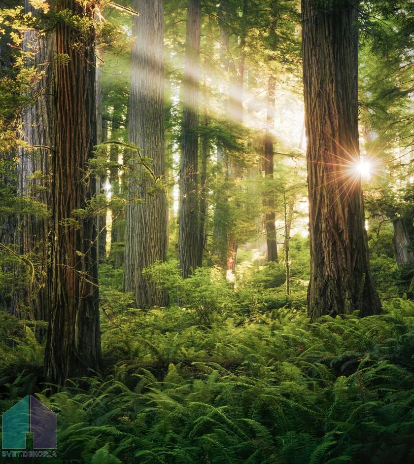 Fototapeta - Goblini Woods