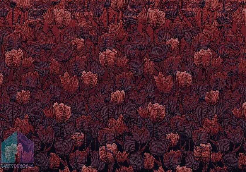 Fototapeta - Tulipe