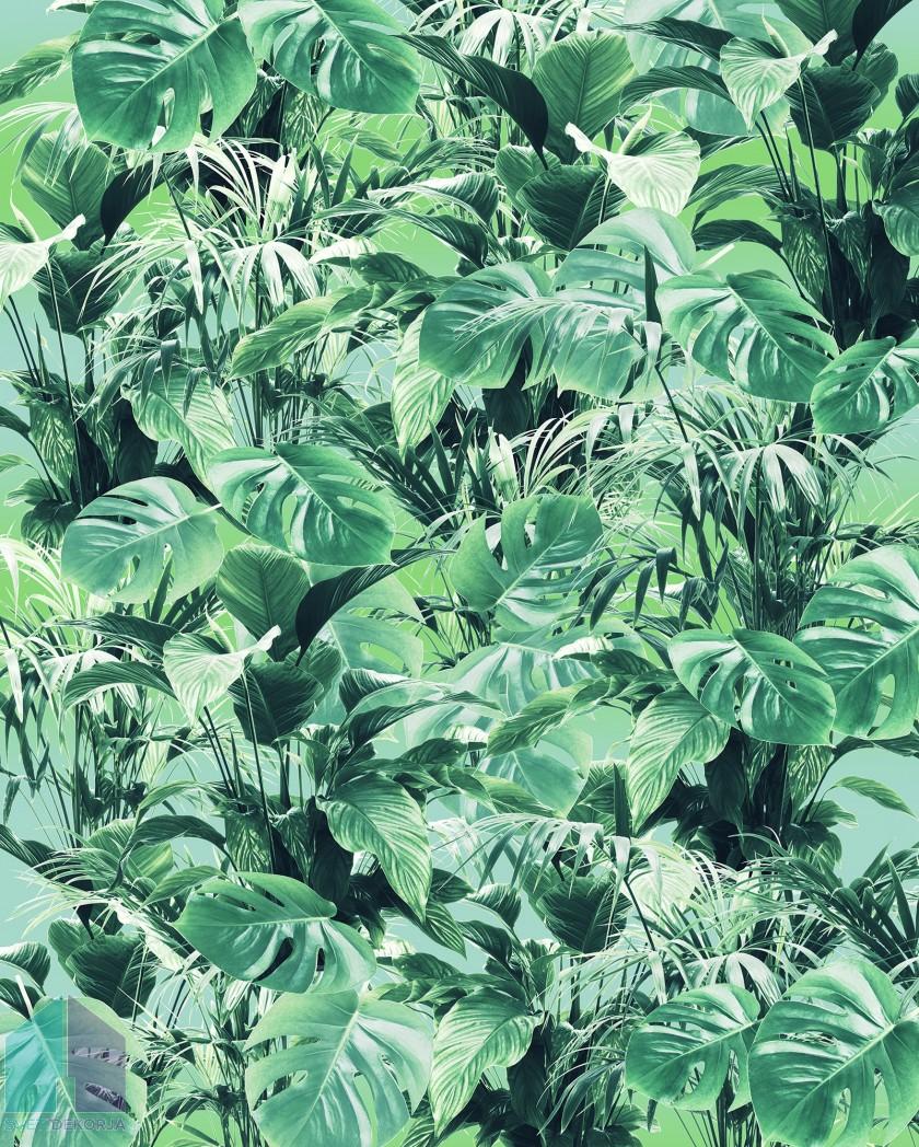 Fototapeta - Evergreen
