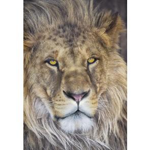 Fototapeta - Lion