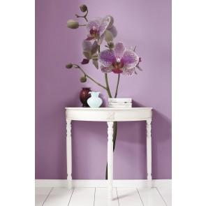 Dekorativna nalepka - Orchidee