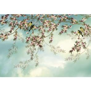 Fototapeta - Sakura