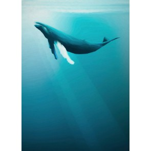 Foto tapeta - Artsy Humpback Whale
