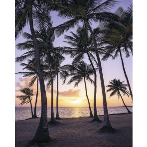 Fototapeta - Palmtrees on Beach