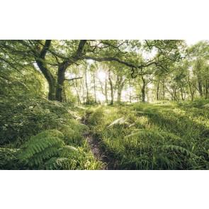 Fototapeta - Mystic Path