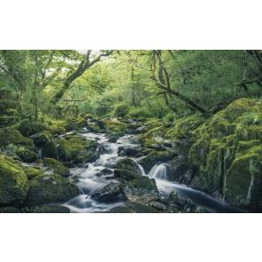 Fototapeta - Green Tales