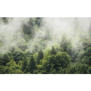 Fototapeta - Forest Land