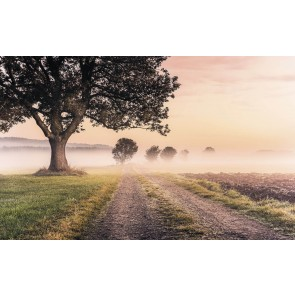 Fototapeta - Misty Morning