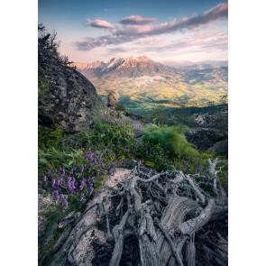Fototapeta - Cvetoče zgodbe