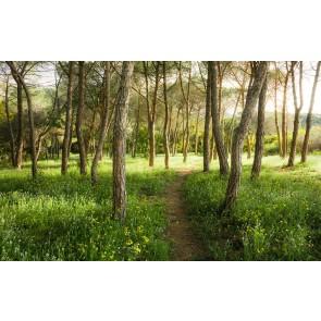 Fototapeta - Magični travnati gozd
