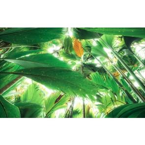 Fototapeta - Streha iz džungle II