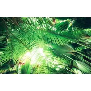 Fototapeta - Streha iz džungle