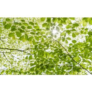 Fototapeta - V spomladanskem gozdu