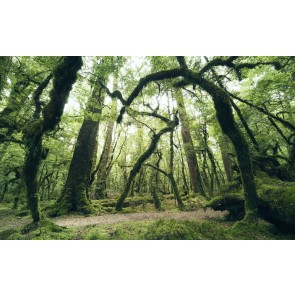 Fototapeta - Starodavna zelena