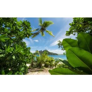 Fototapeta - Oddaljena džungla