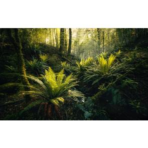 Fototapeta - Fjordland Woods
