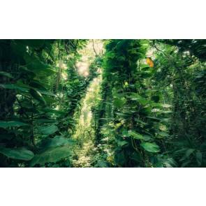 Fototapeta - Zeleni listi