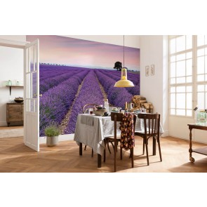 Fototapeta - Provence X8-036