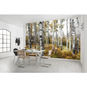 Fototapeta - Colorful Aspenwoods