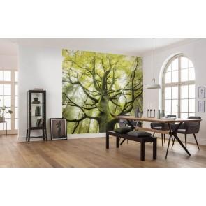 Fototapeta - Sanjsko drevo