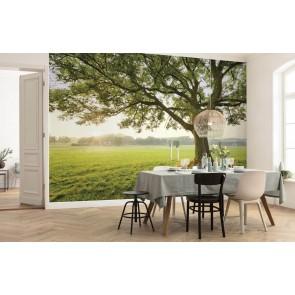 Fototapeta - čarobno drevo