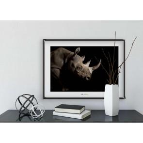 Foto slika brez okvirja - Black Rhinoceros