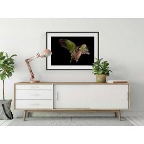 Foto slika brez okvirja - Imperial Parrot