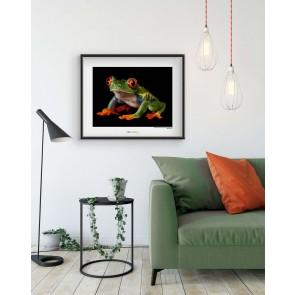Foto slika brez okvirja - Red-eyed Treefrog