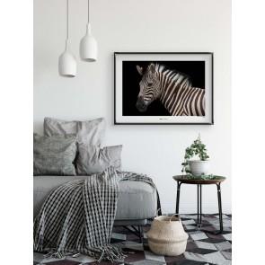 Foto slika brez okvirja - Damara Zebra