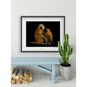Foto slika brez okvirja - Gee's Golden Langur