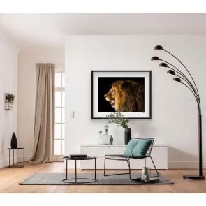 Foto slika brez okvirja - Barbary Lion