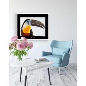 Foto slika brez okvirja - Channel-billed Toucan
