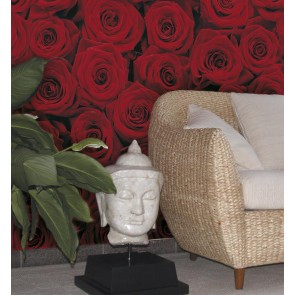 Fototapeta - Roses