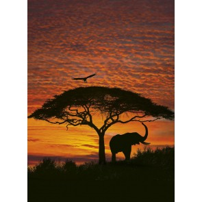 Fototapeta - African Sunset