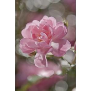 Fototapeta - Bouquet