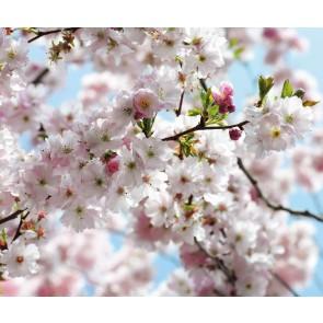 Fototapeta - Spring