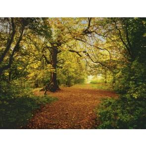 Fototapeta - Autumn Forest
