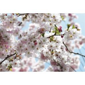Foto tapeta - Spring