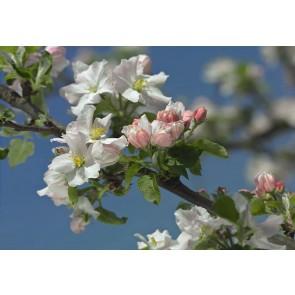 Fototapeta - Primavera
