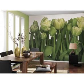 Foto tapeta - Tulips