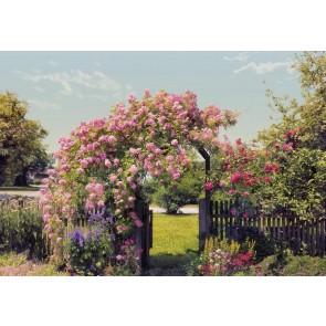 Fototapeta - Rose Garden