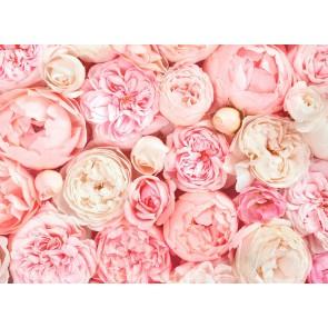Foto tapeta - Roses