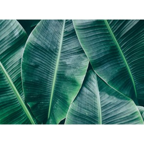 Foto tapeta - Banana Leaves 1