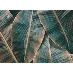 Foto tapeta - Banana Leaves 2