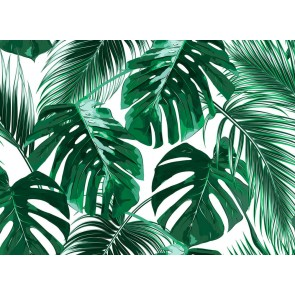 Foto tapeta - Palm Leaves 1