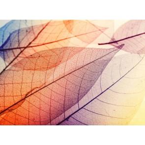 Foto tapeta - Limpid Leaf 1