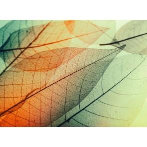 Foto tapeta - Limpid Leaf 2