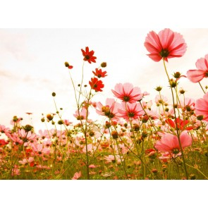 Foto tapeta - Flower Meadow 1