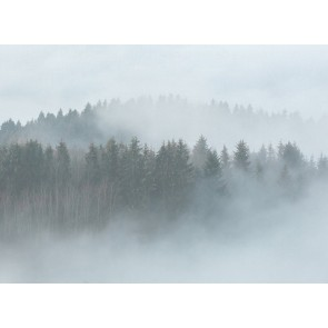Foto tapeta - Misty Forest